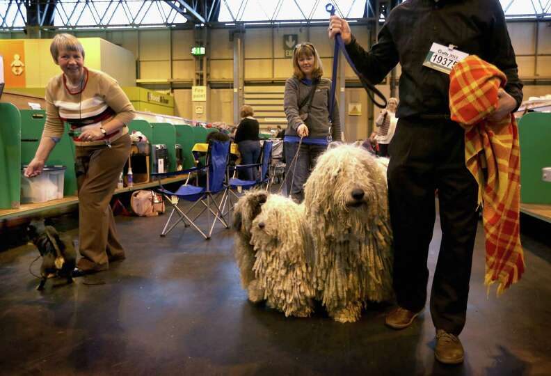 Peggy and Furge, Hungarian Puli and Agatha, a Hungarian Komondor with their owners Isobel and Kim Se