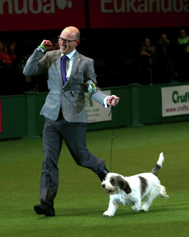 Gavin Robertson with Jilly, a Basset Griffon Vendeen, as they celebrate winning the Best in Show category of Crufts 2013 during the final day at Crufts Dog Show on March 10, 2013 in Birmingham, England. Photo: Rosie Hallam, Getty Images / 2013 Getty Images
