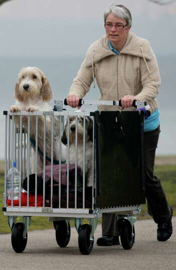 An owner arrives with her dogs on the second day of the Crufts dog show in Birmingham, in central En