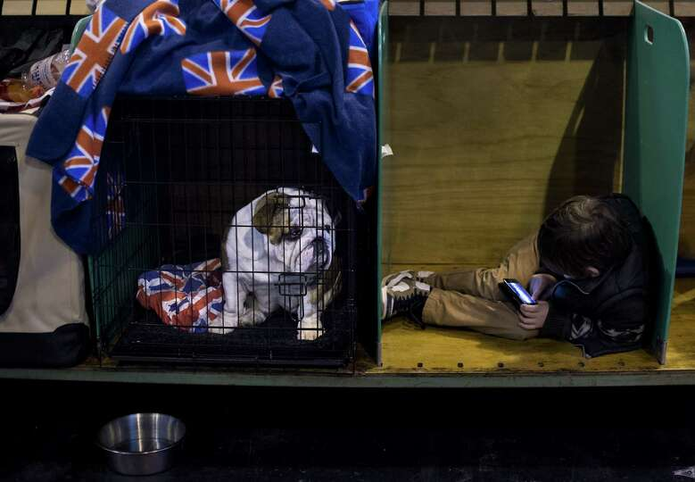 A child (R) sits with his British bulldog during the second day of the Crufts dog show in Birmingham