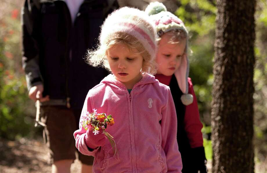 Flowers in hand, Teahen, left, and her twin, Winnie Clifford, 3, walk side-by-side while on a hike at the Houston Arboretum & Nature Center Monday, March 11, 2013, in Houston. Photo: Johnny Hanson, Houston Chronicle / © 2013  Houston Chronicle