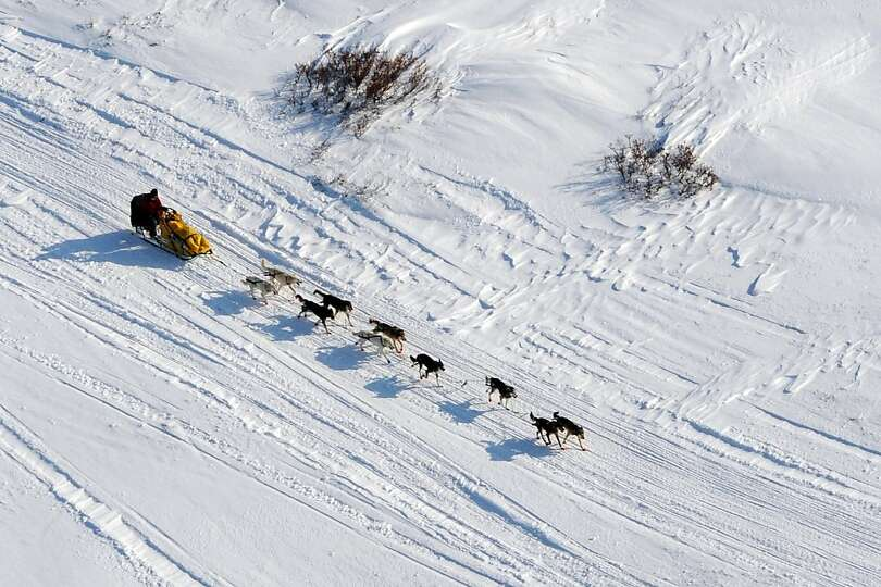 Mitch Seavey drives his dog team towards the burled arch in Nome, Alaska, Tuesday, March 12, 2013, d