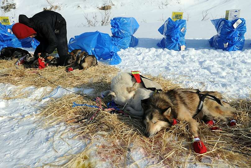 Mitch Seavey puts booties on his dogs before leaving White Mountain in Alaska, Tuesday, March 12, 20