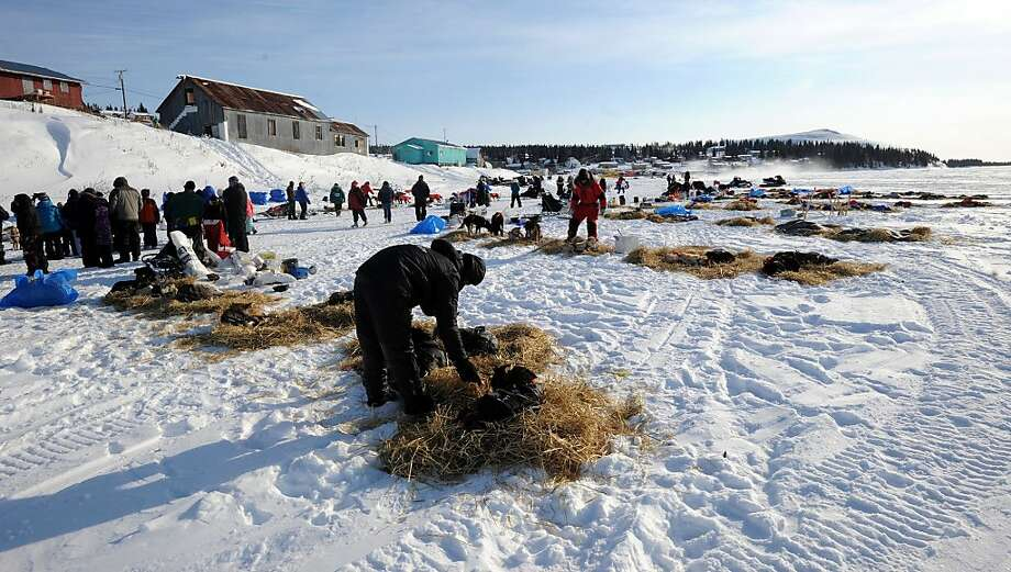 Dallas Seavey, left, and Ray Redington, Jr., tend to their dog teams during the 8-hour layover in White Mountain in Alaska, Tuesday, March 12, 2013, during the Iditarod Trail Sled Dog Race. (AP Photo/The Anchorage Daily News, Bill Roth)  LOCAL TV OUT (KTUU-TV, KTVA-TV) LOCAL PRINT OUT (THE ANCHORAGE PRESS, THE ALASKA DISPATCH) Photo: Bill Roth, Associated Press