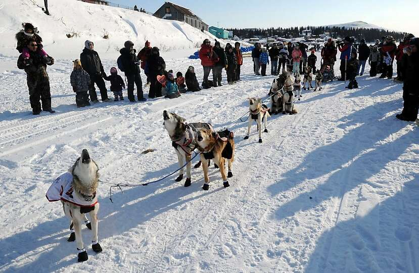 Sled dogs in Aliy Zirkle's team howl as they get ready to leave White Mountain in Alaska, Tuesday, M