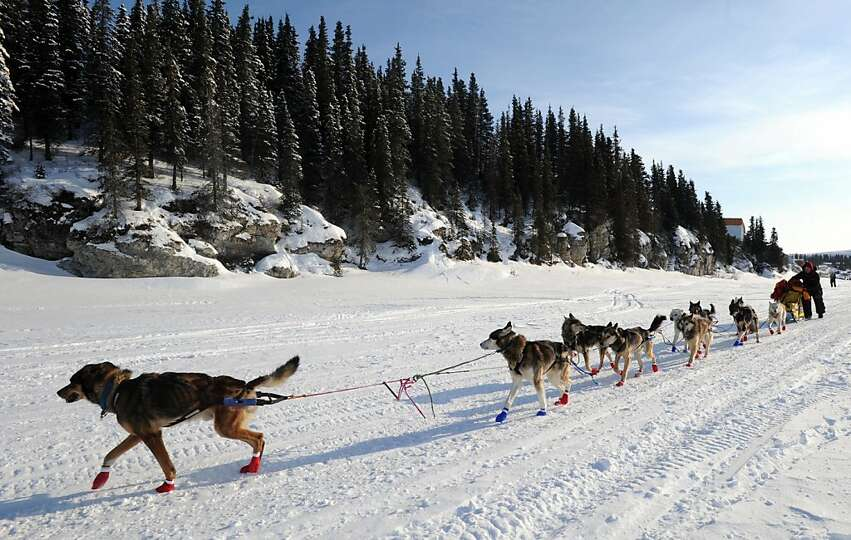Mitch Seavey leaves White Mountain in Alaska, Tuesday, March 12, 2013, during the Iditarod Trail Sle