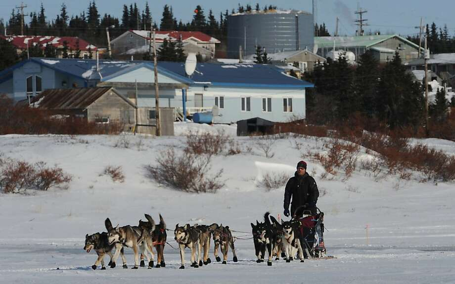 Aaron Burmeister leaving Koyuk in Alaska during the Iditarod Trail Sled Dog Race on Monday, March 11, 2013. (AP Photo/The Anchorage Daily News, Bill Roth) Photo: Bill Roth, Associated Press