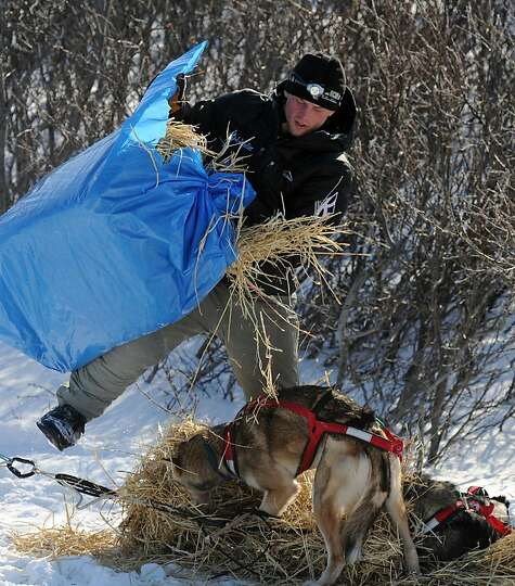 Dallas Seavey beds down his dog team during the Iditarod Trail Sled Dog Race at the Koyuk checkpoint