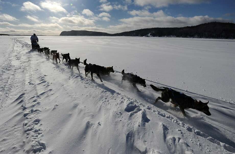Four-time Iditarod champion Martin Buser drives his dog team up the wind-swept Yukon River as he nears Kaltag on Saturday, March 9, 2013.  (AP Photo/Anchorage Daily News, Bill Roth) Photo: Bill Roth, Associated Press