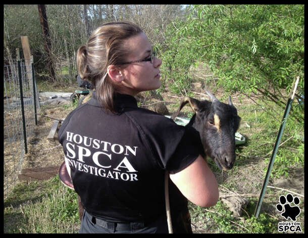 One of the animals rescued from a Newton County home. Photo: Courtesy Photo/Houston SPCA