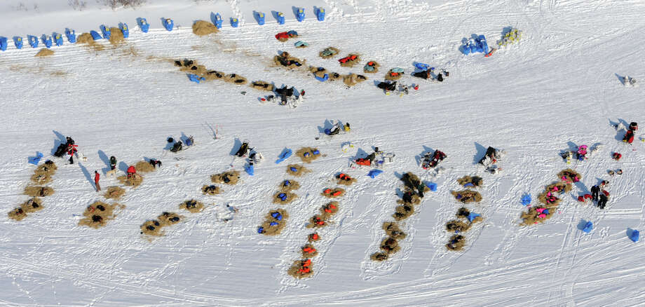 Dog teams rest during an 8-hour layover before heading to the finish on the Fish River in White Mountain in Alaska, Tuesday, March 12, 2013, during the Iditarod Trail Sled Dog Race. Photo: Bill Roth, Associated Press / The Anchorage Daily News