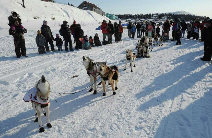 Sled dogs in Aliy Zirkle's team howl as they prepare to leave White Mountain, Alaska, on Tuesday, Ma