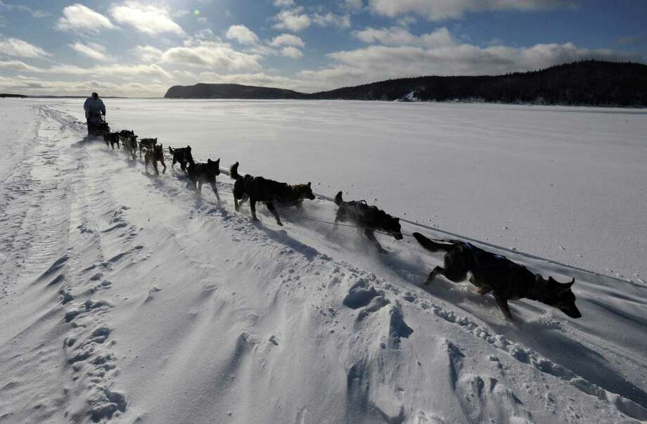 Four-time Iditarod champion Martin Buser drives his dog team up the wind-swept Yukon River as he nears Kaltag, Alaska, on Saturday, March 9, 2013. Photo: Bill Roth, McClatchy-Tribune News Service / Anchorage Daily News