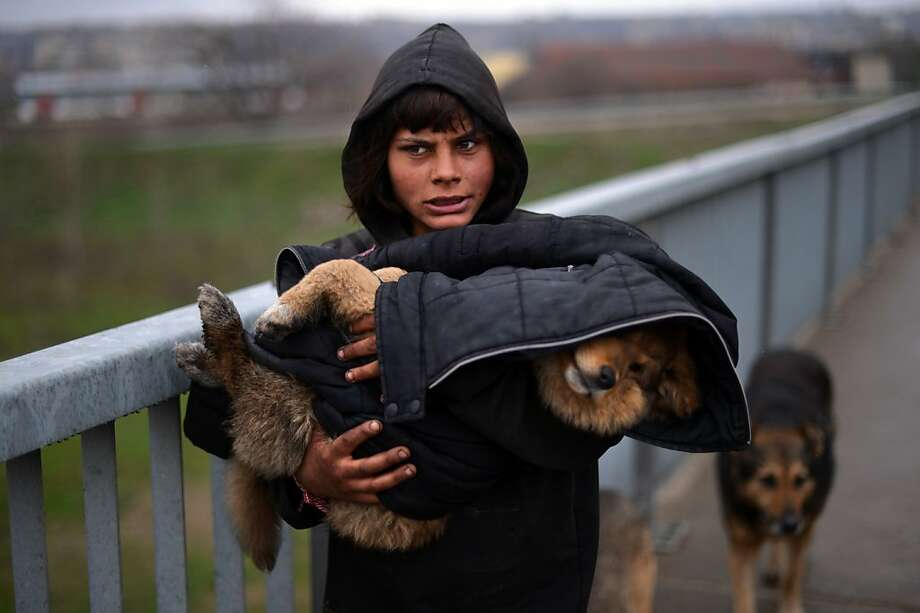 Ailing puppy: A woman carries her sick dog in Bulgaria's northern town of Lom. Photo: Dimitar Dilkoff, AFP/Getty Images