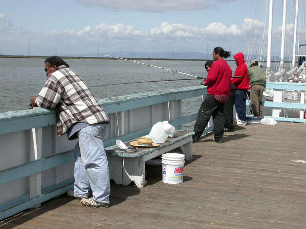 In spring, anglers fish for jackmelt at pier in Redwood City Harbor