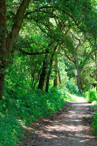 Castle Rock Trail enters spring greenery at Diablo Foothills Regional Park