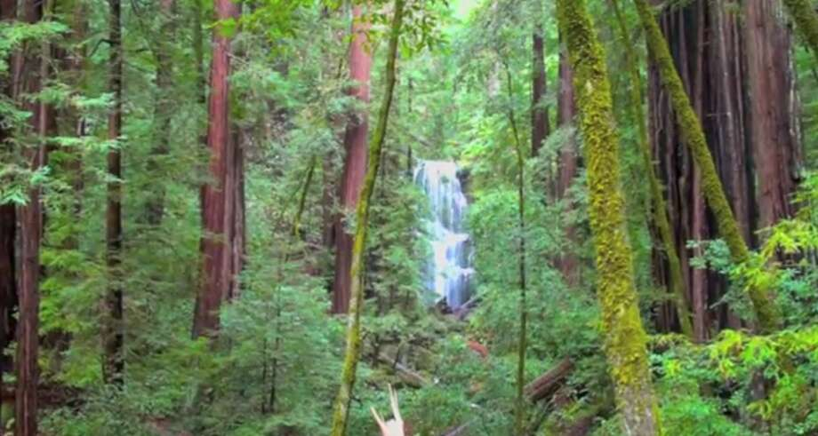 When you first spot 70-foot Berry Creek Falls, it is framed by redwoods