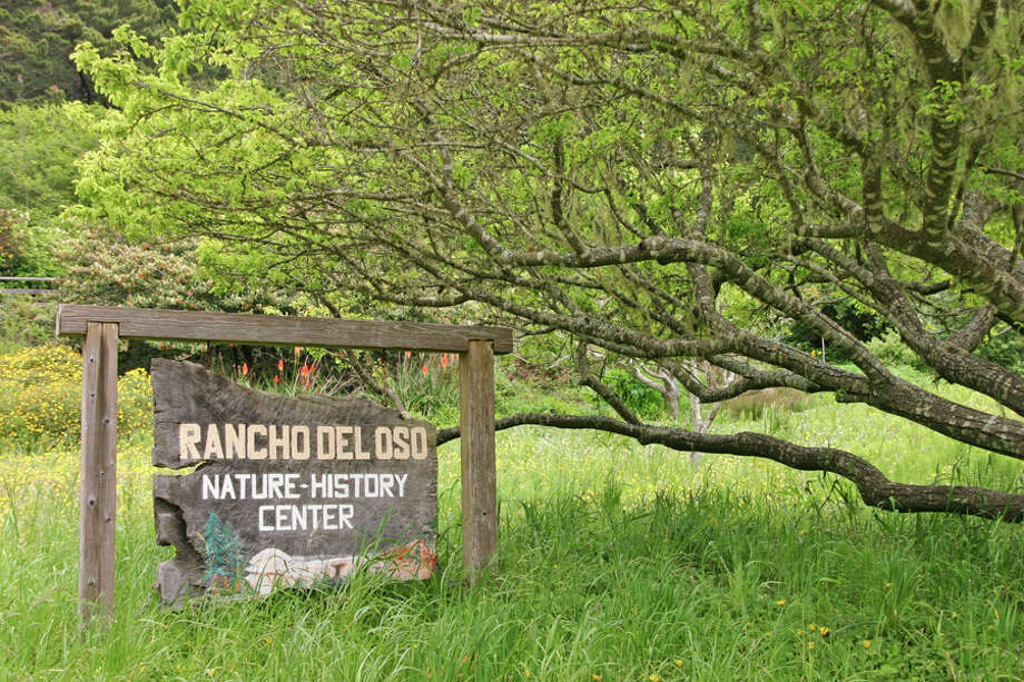 Rancho del Oso is a lush spot with great wildflowers on coast near Ano Nuevo