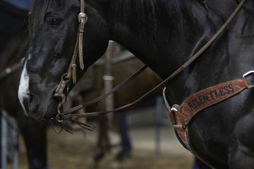 Horses are prepared to compete in Tie-Down Roping during the BP Super Series Semifinals 1 at Reliant