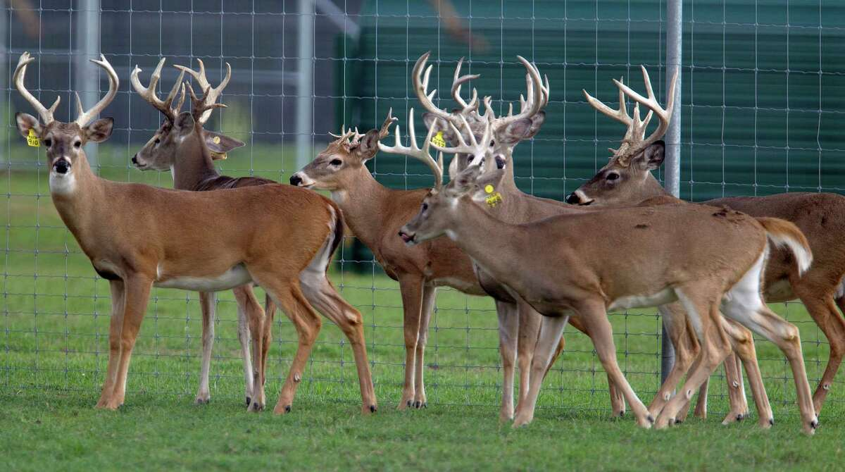 Authority to regulate Texas' commercial deer breeding industry would shift from Texas Parks and Wildlife Department to Texas Animal Health Commission under a pair of bills filed in the Texas Legislature.