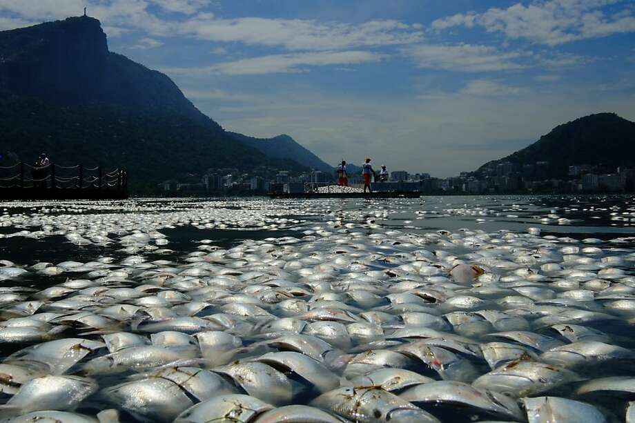 A stinky row in Rio: Scores of dead fish float in the Rodrigo de Freitas lagoon, which was to host rowing qualifiers for the 2016 Olympic Games in Rio de Janeiro. Workers labored to remove some 65 tons of dead fish before the events. The fish suffocated after heavy rains washed rotting plant matter into the lagoon, causing oxygen levels to drop. Photo: Christophe Simon, AFP/Getty Images