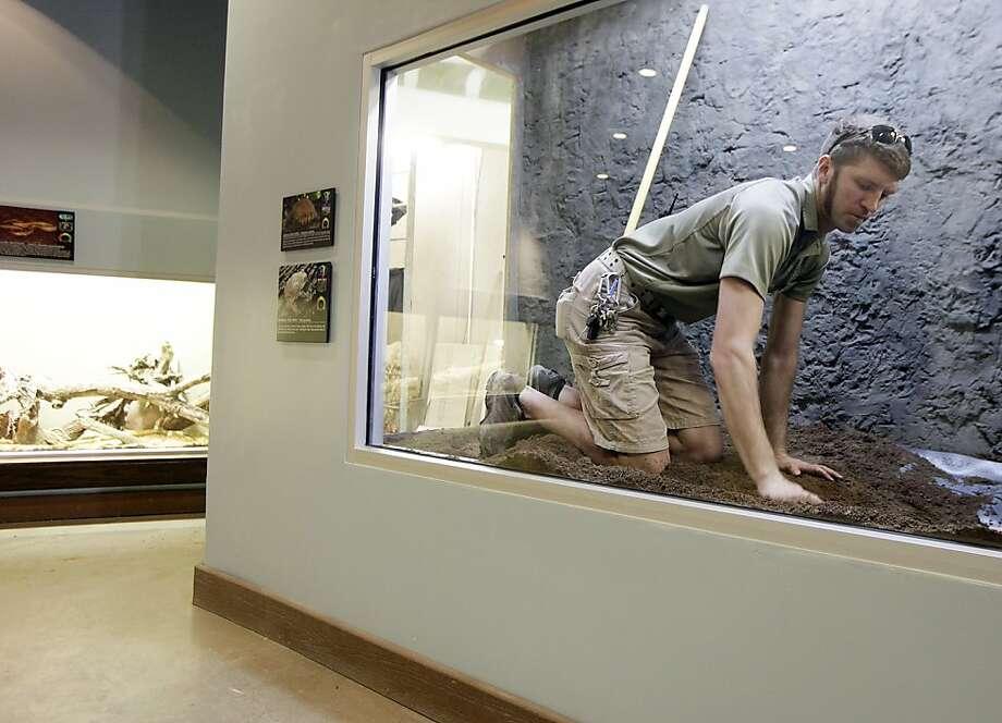 Nat Burgess, reptiles/aquatics zookeeper, works to get a turtle display ready at the Tulsa Zoo's new WildLife Trek Monday, March 13, 2013. (AP Photo/Tulsa World, Mike Simons) Photo: Mike Simons, Associated Press