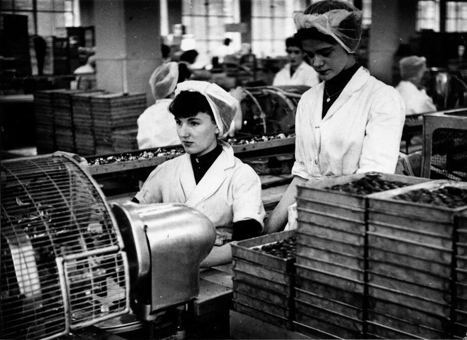 Women pictured in 1954 at work wrapping chocolates at Cadbury's model factory at Bournville, Birmingham, England. Photo: Bert Hardy, / / Picture Post