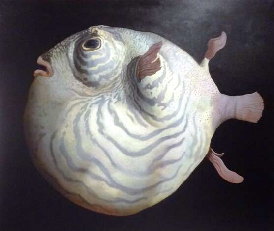 Three paintings of mola-like fish are the centerpiece of the solo exhibition at Blue Star Contemporary Art Museum. Photo: Photos By Steve Bennett / San Antonio Express-News