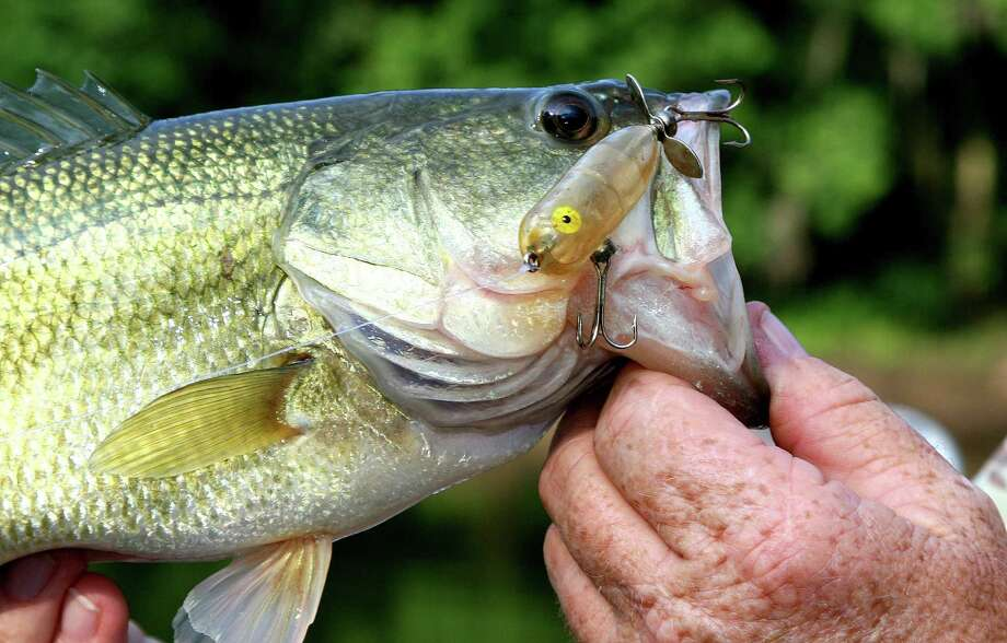 The big one may not get away if you're fishing in the state. Almost 100 Texas waters have yielded at least one largemouth bass weighing 13 pounds or more. Photo: Shannon Tompkins