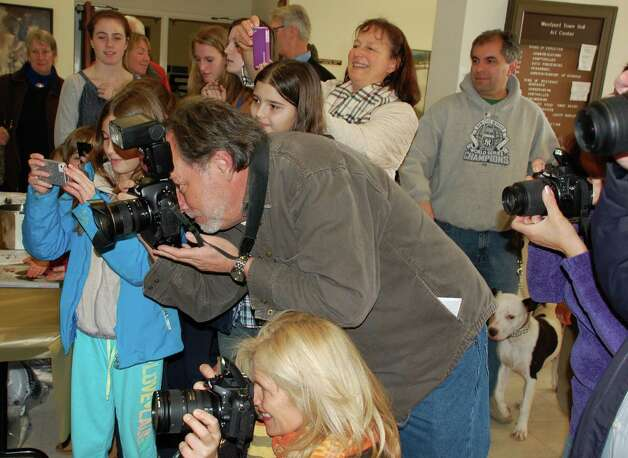 "Photographs were snapped, paparazzi-style, Thursday afternoon at the Westport Animal Shelter Adocates' annual ""Top Dog"" contest at Town Hall. About a dozen dogs were on hand, including five ribbon winners in the canine compettion, which drew a total of 47 entries.  WESTPORT NEWS, CT 3/14/13 Photo: Jarret Liotta / Westport News contributed"
