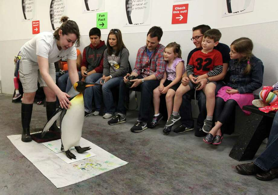 "Spring break visitors get a behind the scenes public penguin encounter from ""Watson,"" a King penguin, and biologist Jessica Raeke, who create paintings for visitors at Moody Gardens Aquarium Pyramid. Photo: Karen Warren, Houston Chronicle / © 2013 Houston Chronicle"