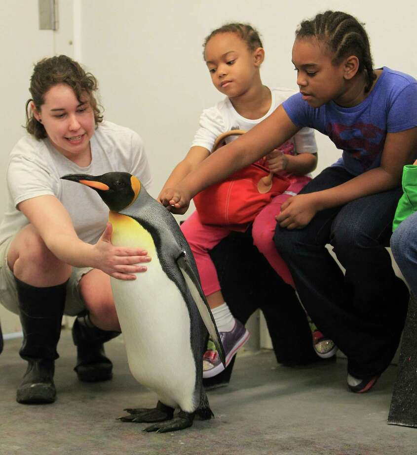 "Clarq Bishop, 8 1/2, right, and her sister, Kamille Bishop, 4 1/2, pet ""Watson,"" a King penguin, during a behind the scenes public penguin encounter with biologist Jessica Raeke at Moody Gardens Aquarium Pyramid. Photo: Karen Warren, Houston Chronicle / © 2013 Houston Chronicle"