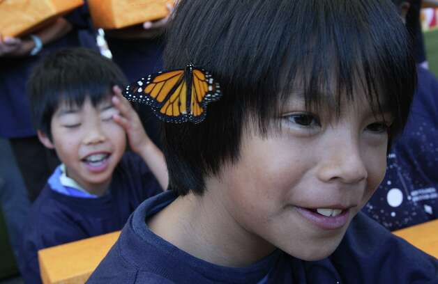 Wesley makes friends with a monarch butterfly during the opening ceremonies for the California Academy of Sciences in San Francisco on Saturday, September 27, 2006. Photo: Laura Morton, Special To The Chronicle / SFC