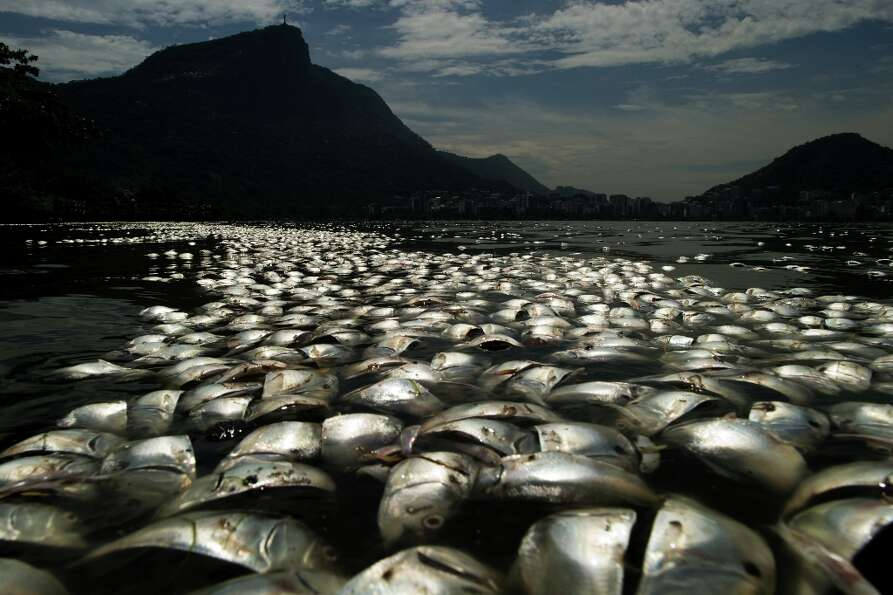 Tons of dead fish float on the waters of the Rodrigo de Freitas lagoon, beside the Corcovado mountai