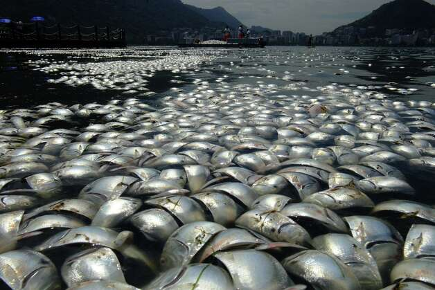 Tons of dead fish float on the waters of the Rodrigo de Freitas lagoon, beside the Corcovado mountain in Rio de Janeiro, Brazil on March 13, 2013. AFP PHOTO / CHRISTOPHE SIMONCHRISTOPHE SIMON/AFP/Getty Images Photo: CHRISTOPHE SIMON, AFP/Getty Images / AFP