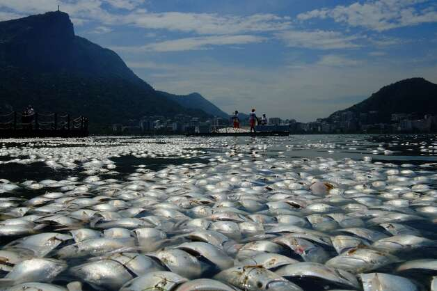 Tons of dead fish float on the waters of the Rodrigo de Freitas lagoon, beside the Corcovado mountain in Rio de Janeiro, Brazil on March 13, 2013. Photo: CHRISTOPHE SIMON, AFP/Getty Images / AFP