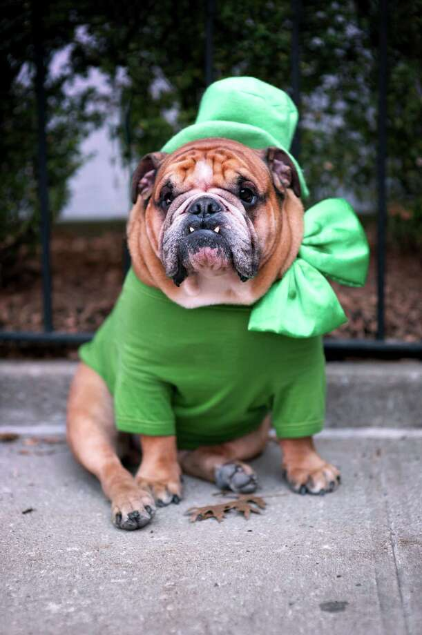 And as for wearing green on St. Patrick's Day, that's another American  invention. Some Irish folklore attached unlucky connotations to the  color, and St. Patrick was originally associated with the color blue. Photo: Joseph O. Holmes / Portfolio.streetnine.com, Getty Images / Flickr RF