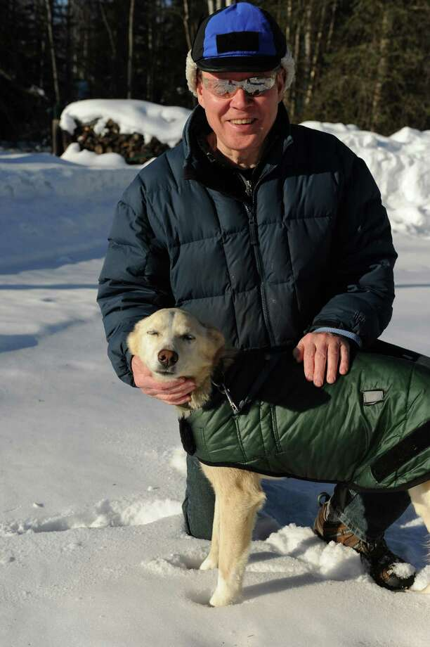 Stan Smith of Birchwood, Alaska, is taking care of Newton Marshall's Iditarod sled dog on Thursday, March 14, 2013. May, a strawberry blonde female, probably traveled 300 to 400 miles over some of the most rugged country Alaska serves up, said Smith, who is giving love, food and temporary shelter to May. (Bob Hallinen/Anchorage Daily News/MCT) Photo: Bob Hallinen, McClatchy-Tribune News Service / Anchorage Daily News