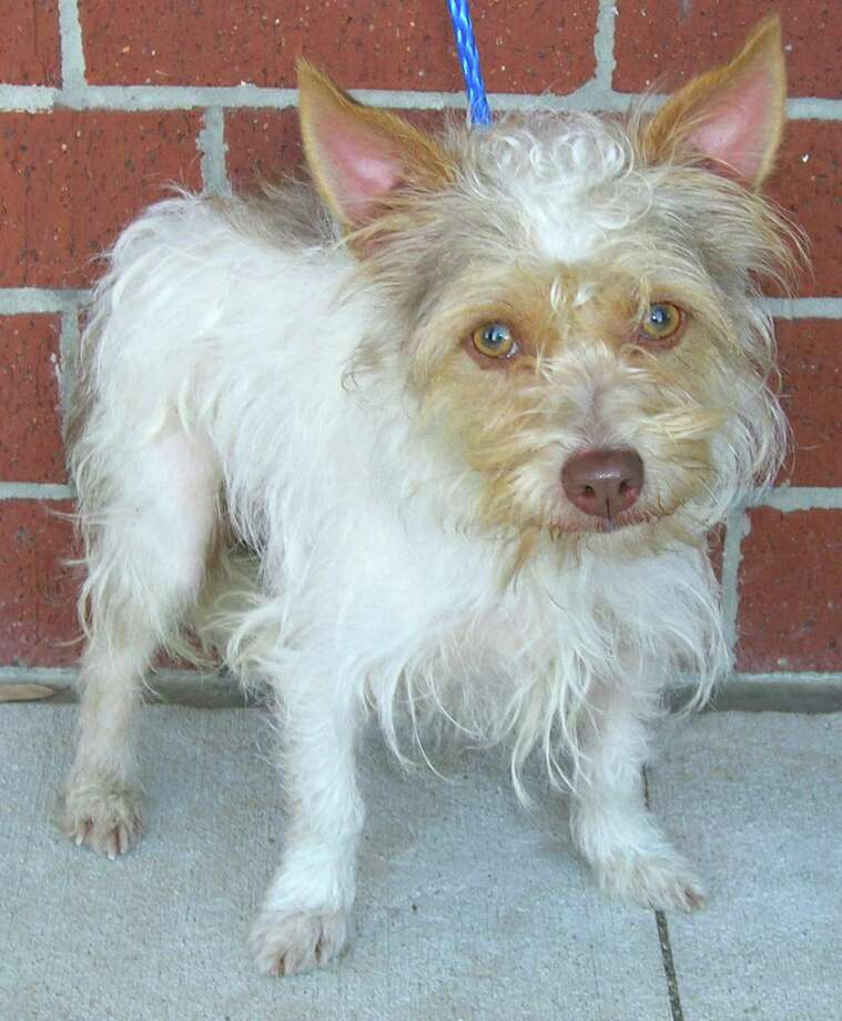 Snoopy is the Pethouse Pet of the Week  He's a Yorkie mix. OLYMPUS DIGITAL CAMERA