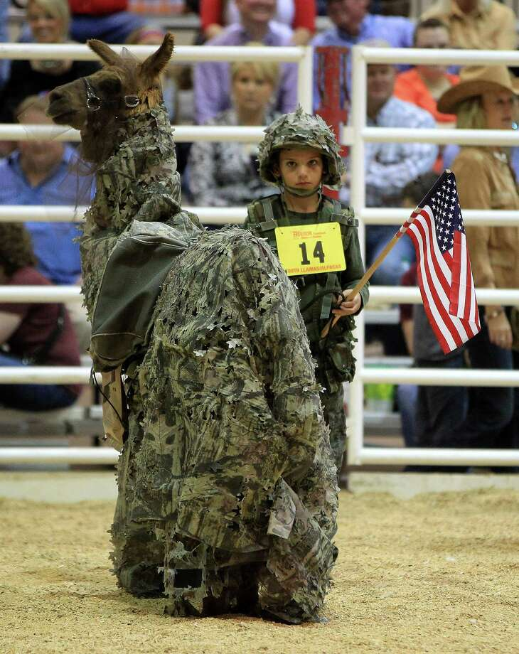 "Some animals wear clothes just for fun like these at the rodeoTanner White, 10, dressed his llama  ""Lil Scott""  military style at the Houston Livestock Show and Rodeo Friday, March 15, 2013, in Houston. Photo: Karen Warren, Houston Chronicle / © 2013 Houston Chronicle"