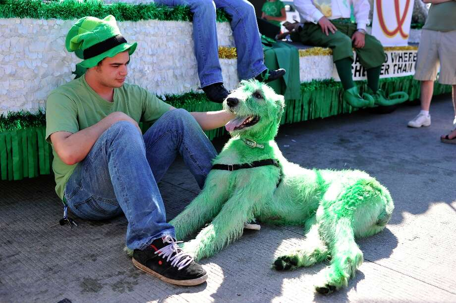 U.S.: Either this Irish wolfhound is really, really envious, or this Chicago guy painted his dog green for St. Patrick's Day. Um, OK. Photo: Brian Kersey, Getty Images / 2011 Getty Images