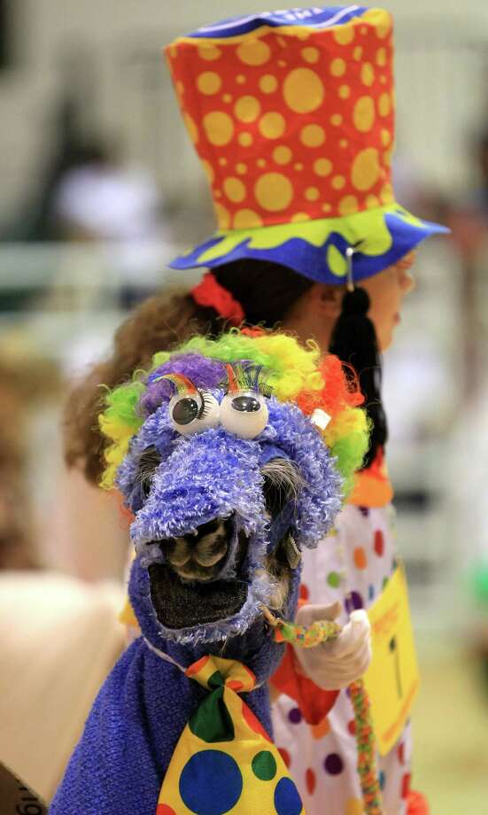 """First place winner Hunter Snow, 14, with her llama """"Stormy"""" who was dressed as the Cookie Monster in a clown taxi, during the Youth Llama and Alpaca Costume Show at the Reliant Arena at the Houston Livestock Show and Rodeo Friday, March 15, 2013, in Houston. Photo: Karen Warren, Houston Chronicle / © 2013 Houston Chronicle"""