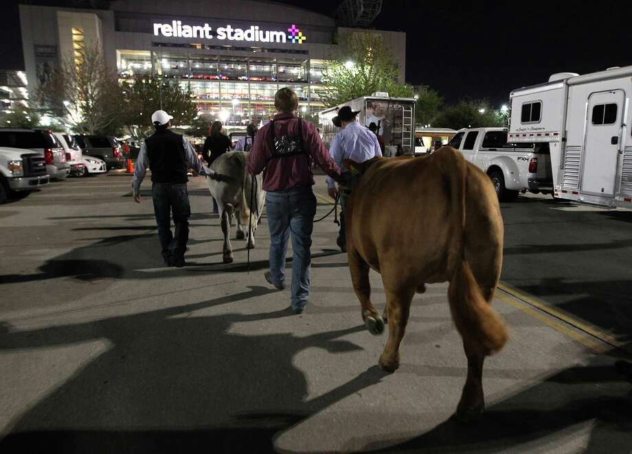 Steers and kids are lead to Reliant Stadium from Reliant Center for the Grand Champion Steer of the Show with his steer at the Houston Livestock Show and Rodeo Friday, March 15, 2013, in Houston. Photo: Karen Warren, Houston Chronicle / © 2013 Houston Chronicle