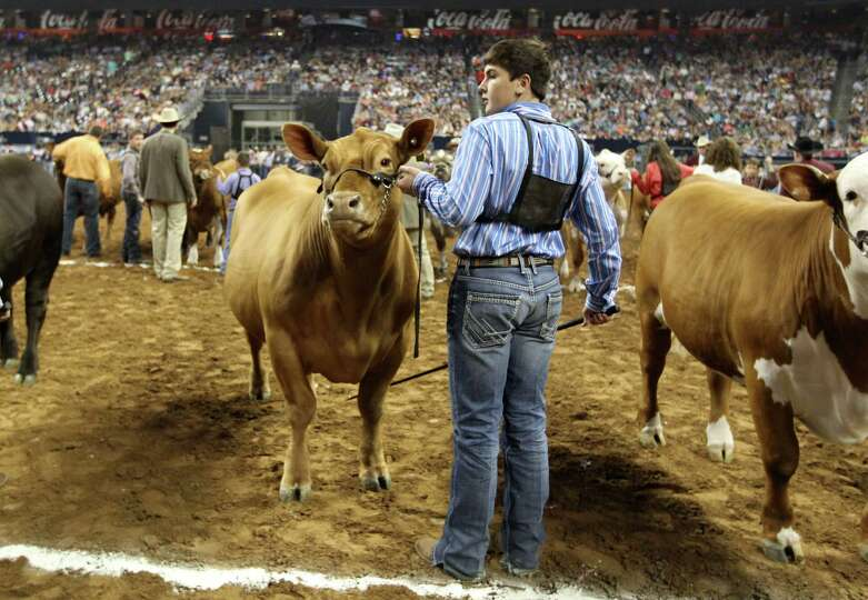 Melton Long, of Wellington, with his steer Chappie before winning the Grand Champion Steer of the Sh