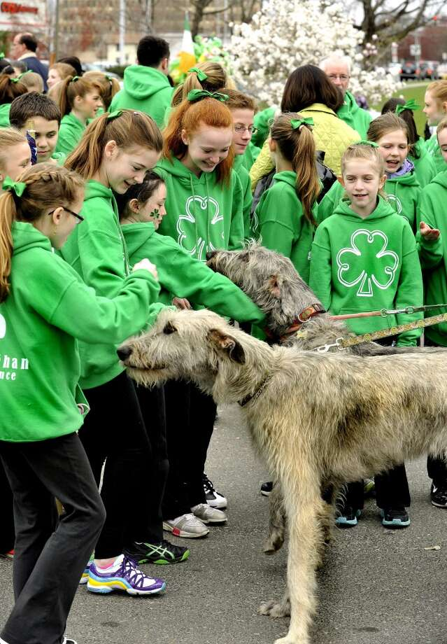 No. 27: Danbury.The city of Danbury has the fourth smallest percentage of resident claiming an Irish ancestry in Southwestern Connecticut, at 12.8 percent. Irish Wolfhounds Fergus and Abby greet members of Gilleghan's Irish Dance before the St. Patrick's Day parade in Danbury Sunday, March 25, 2012.