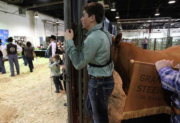 "Kelton Long, 15, of Wellington, Texas, waits with ""Chappy"" the Grand Champion Junior Market Steer for photos with the auction winners during the 2013 Junior Market Steer Auction at the Houston Livestock Show and Rodeo Saturday, March 16, 2013, in Houston. The buyers Evelyn and Roger Bethune; Vanessa, Chris, Kyle and Rihanna Bruegger; Sally and Rigo Flores; and Stewart Title/Mary Alice and E.D. Lester went on to win Chappy with a bid of $360,000. Photo: Karen Warren, Houston Chronicle / © 2013 Houston Chronicle"