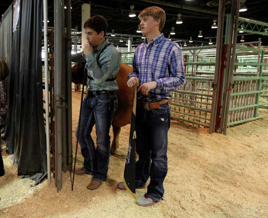 "Kelton Long, 15, of Wellington, in green, waits with ""Chappy"" the Grand Champion Junior Market Steer for photos with the auction winners during the 2013 Junior Market Steer Auction at the Houston Livestock Show and Rodeo Saturday, March 16, 2013, in Houston. The buyers Evelyn and Roger Bethune; Vanessa, Chris, Kyle and Rihanna Bruegger; Sally and Rigo Flores; and Stewart Title/Mary Alice and E.D. Lester went on to win Chappy with a bid of $360,000. Photo: Karen Warren, Houston Chronicle / © 2013 Houston Chronicle"
