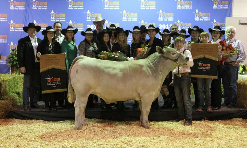 grand champion steer fetches 360 000 houston chronicle