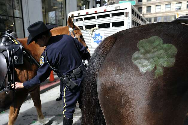 A shamrock is painted on a horse that's part of the SFPD's Mounted Unit that will be marching in the annual St. Patrick's Day Parade in San Francisco, Saturday March 16th, 2013. Photo: Michael Short, Special To The Chronicle