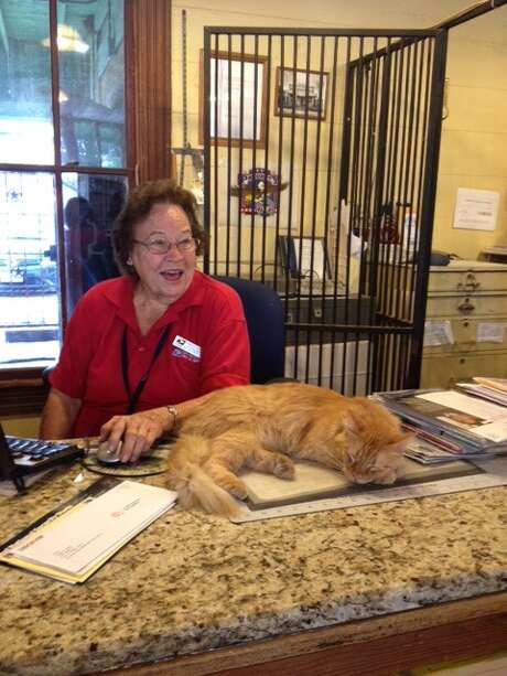 Maggie the cat helped postmistress Dorothy Beyer put up the mail until the Postal Service deemed her presence inappropriate not long ago. Photo: Joe Holley / Houston Chronicle